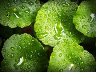 Water Drop On Leaf Stock Photos